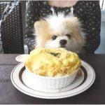 星乃珈琲店 犬